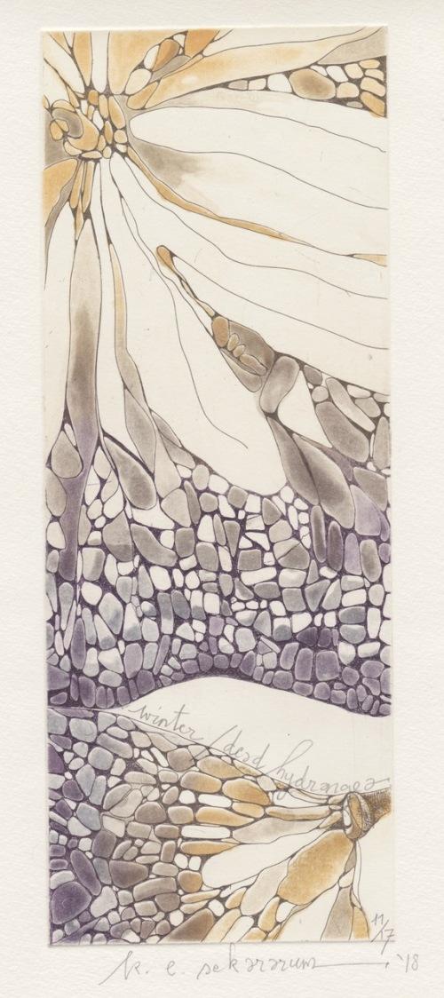K.E. Sekararum _ Winter Dead Hydrangea